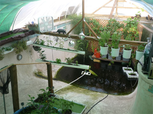 Swimming pool aquaponics for Greenhouse over swimming pool