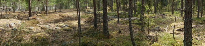 Upplands Väsby woods panorama