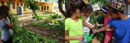 Holon kids about to fight over the biggest cucumber, and a school garden collecting water from air conditioner condensation