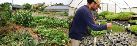 Matan's crops and greenhouse where he is selecting some starts for our garden in Holon