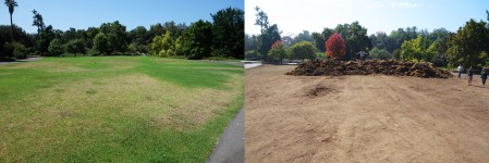 a mountain of LA Arboretum lawn looming over the one acre site, ready for wildflowers