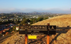 Wildflowering L.A., 2013-14