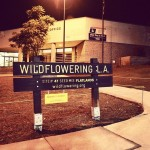 Wildflowering LA site #47,  at the Eagle Rock US Post Office on Colorado Blvd.