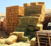 straw and hay bales piled high at the feed and seed