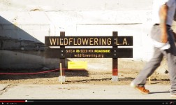 Wildflowering L.A. video by MOCA TV