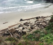 Mendocino beach driftwood