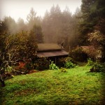 foggy Salmon Creek Farm orchard